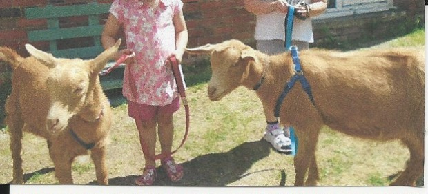 goats ata pre school
