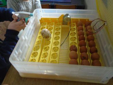 egg incubator 2020